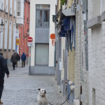 More artsy shots - a dog in the streets of Bruges. Which then barked viciously as we walked by...